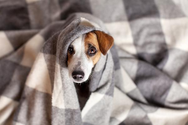 Hund lukt och bakterier