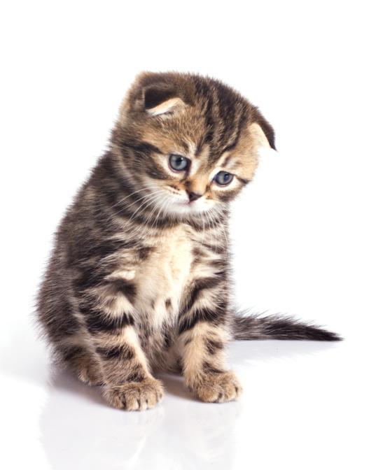 Sanera efter kattkiss - använd ozon för att ta bort kattkiss doften.